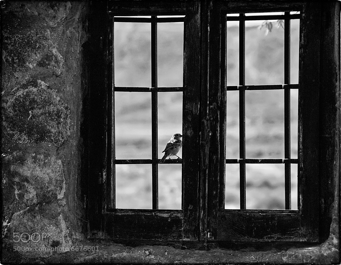 Photograph Canto a la libertad / Hymn to freedom. by José Luis  Nuñez on 500px