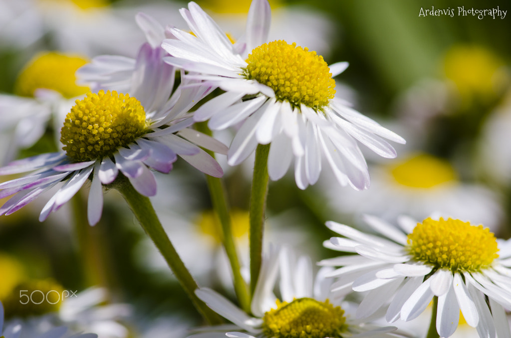 Photograph First attempts at macro shots by Denis Bondioli on 500px