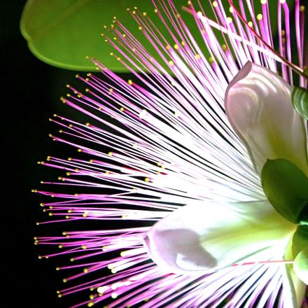 Flower of Kenting 墾丁之花