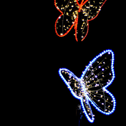 Butterflies in light