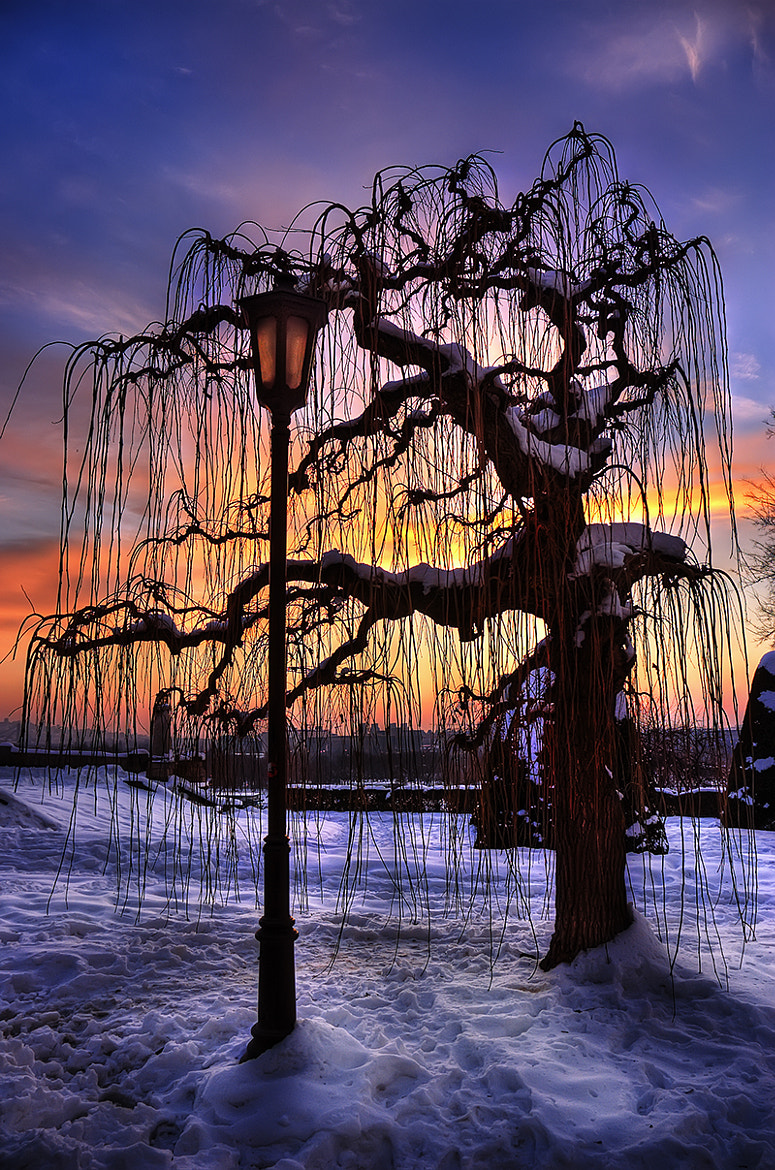 Photograph Tree Of Patience by Milan Dimitrijevic on 500px