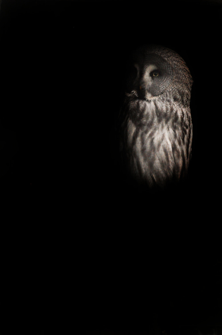 Photograph Owl  by Katie Guthrie on 500px