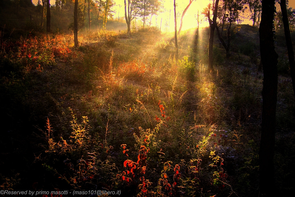 Photograph The first light in the woods - Savigno ( bologna  )_7653 - DVD 15 by primo masotti on 500px