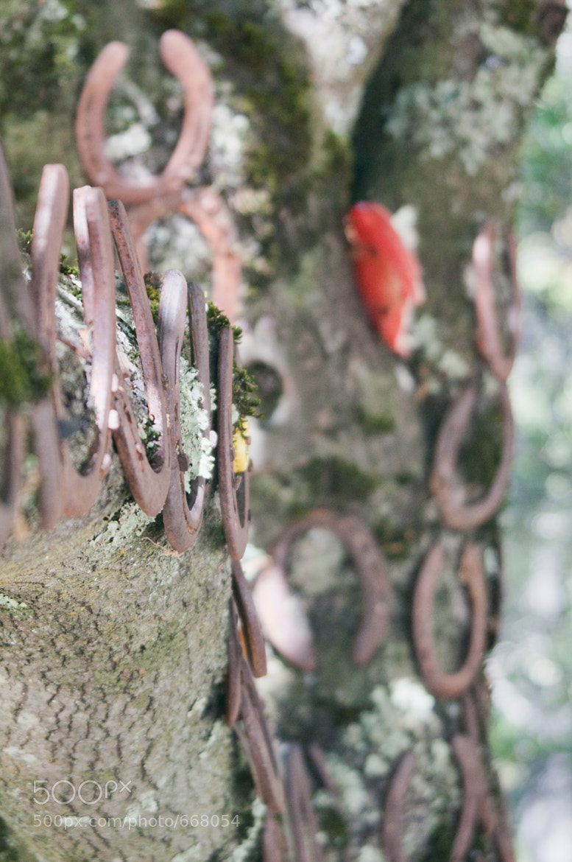 "Photograph ""Lucky Tree"" by alex scheurer on 500px"