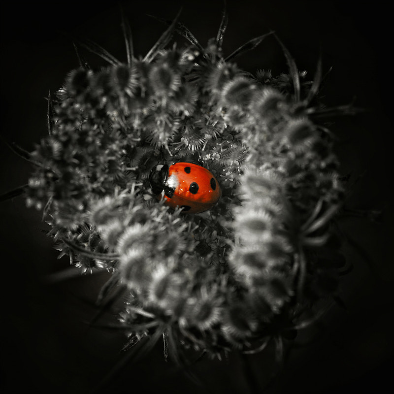 Photograph Dotted by Dr. David Wiese on 500px