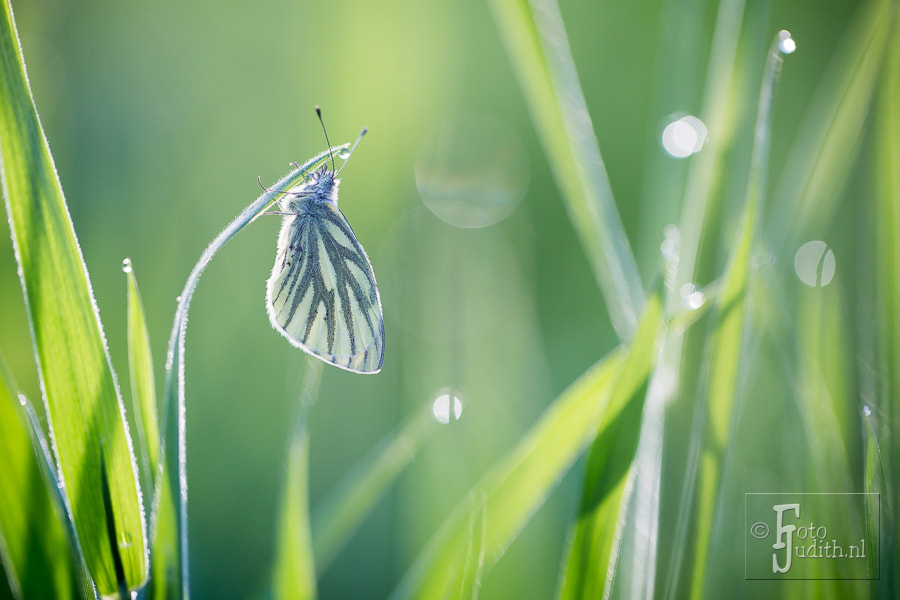 Photograph White and green by Judith Borremans on 500px