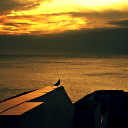 pequeno pássaro à luz do sol poente