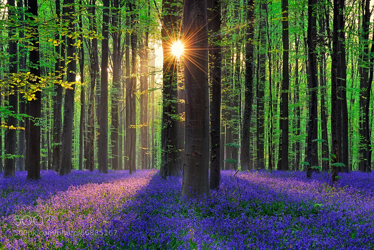 Photograph WS Hallerbos_500px by Walter Spoor on 500px