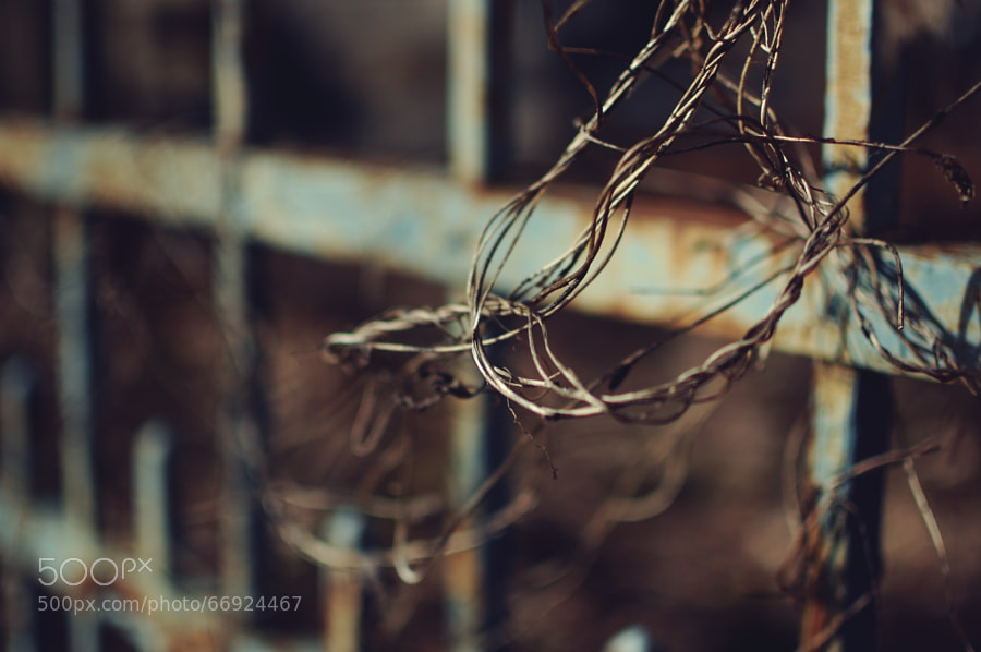Photograph Vine on 500px