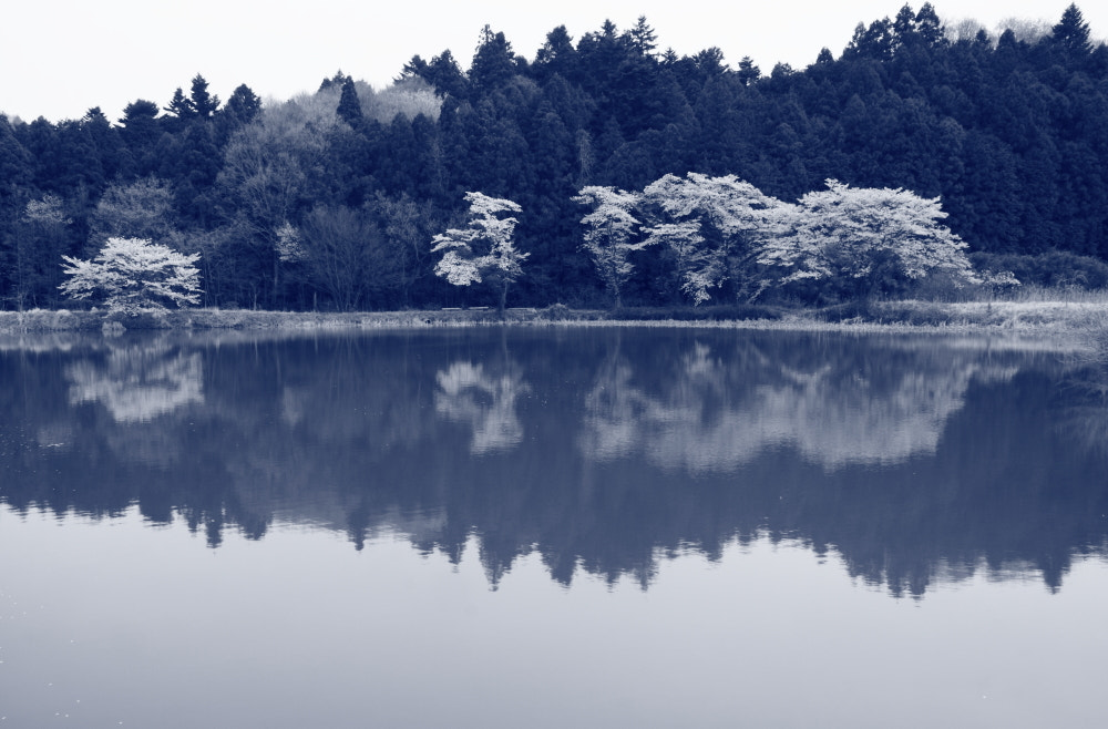 Photograph Calm Lakeside by Sueo Takano on 500px