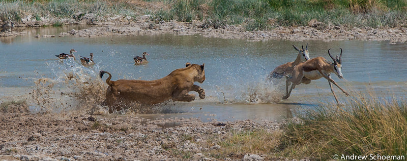 Photograph A Moment before! by Andrew Schoeman on 500px