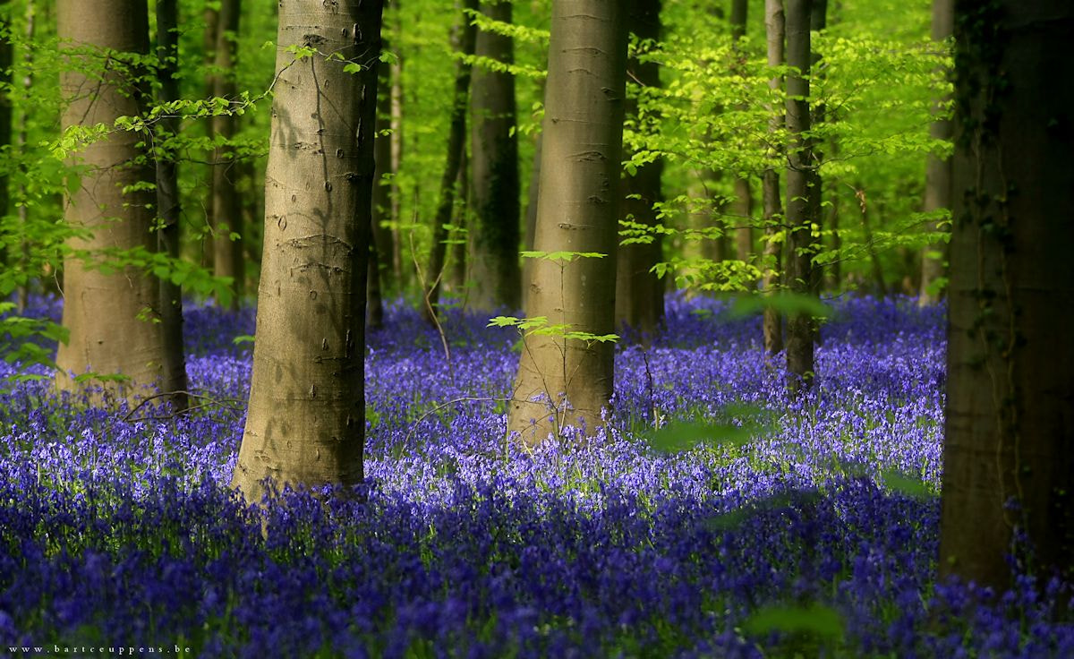Photograph Enchanted forest 1 by Bart Ceuppens on 500px