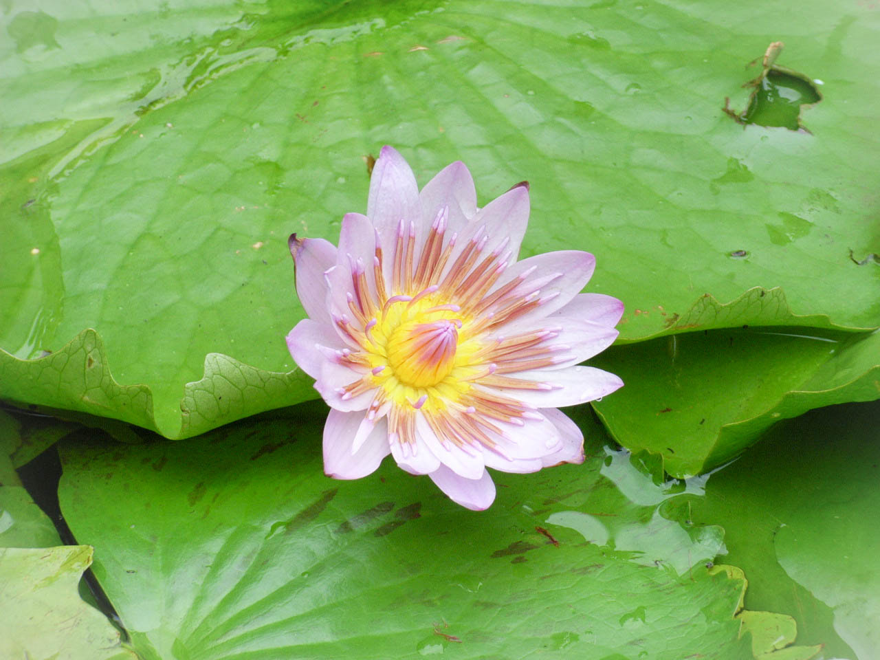 Photograph Water lily by Kim Fong on 500px