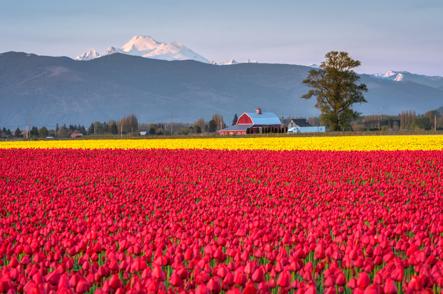 Skagit Valley Spring Sunset by Ray Green on 500px.com