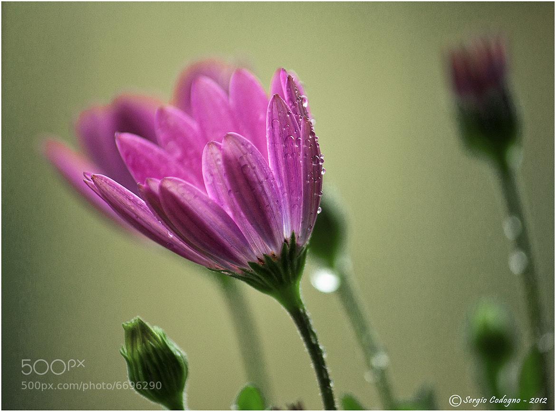 Photograph Rain by Sergio Codogno on 500px