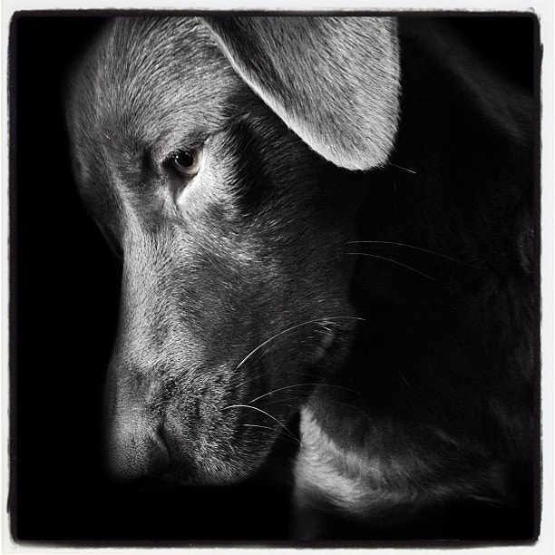 Photograph Wuff by mike less on 500px