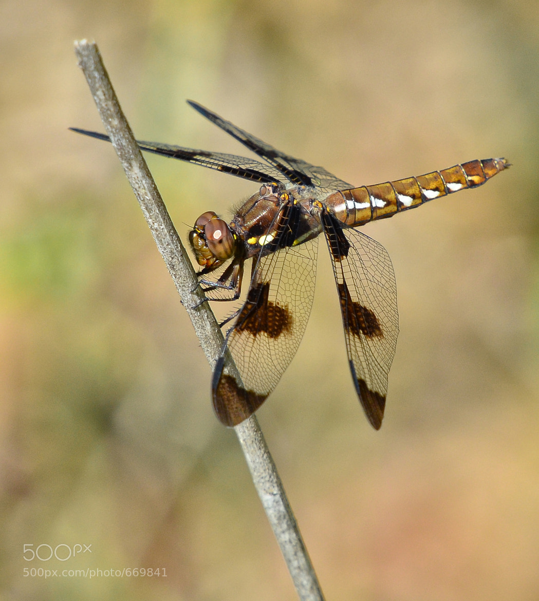 Photograph Dragonfly in the Forest by Jeff Clow on 500px
