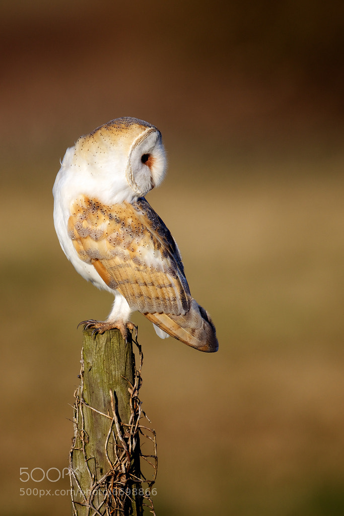 Photograph looking back by Mark Bridger on 500px