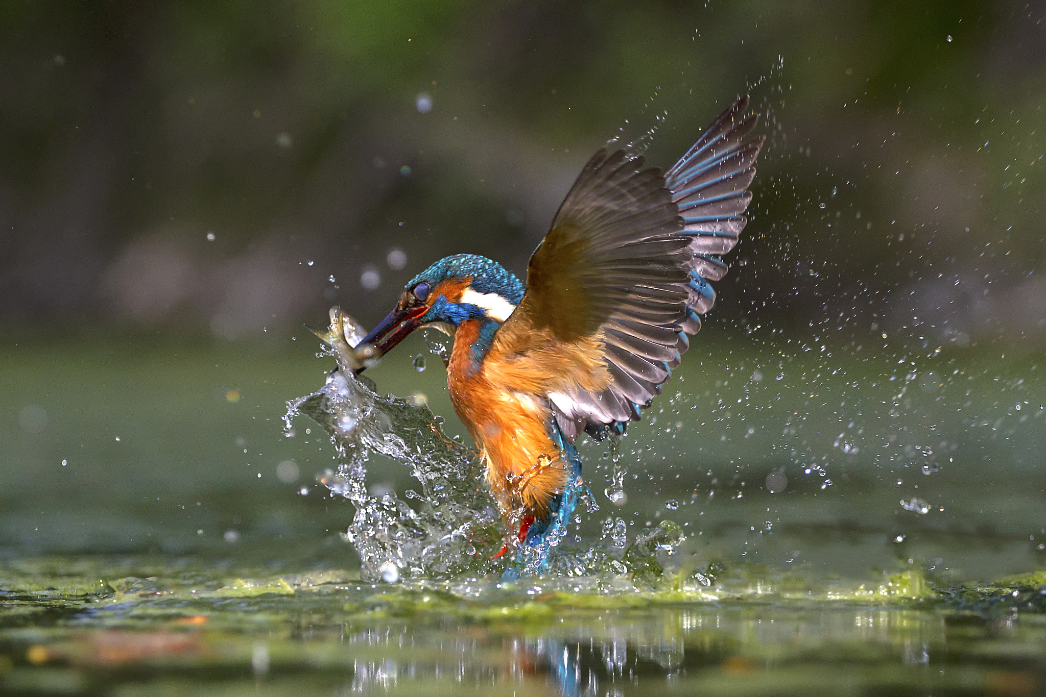 Photograph Wings by Marco Redaelli on 500px