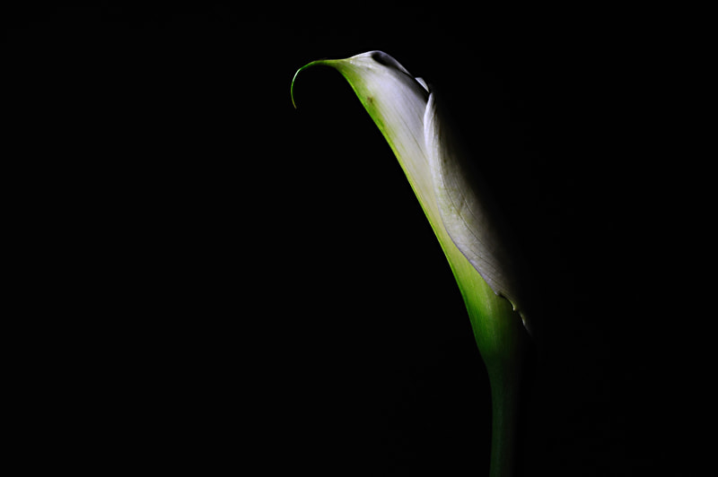 Photograph The Flower [Calla] by Choi Jo Ryong on 500px