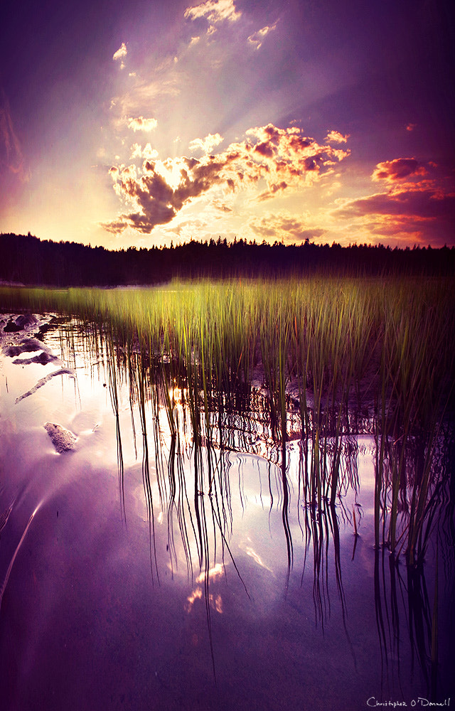 Photograph Wetlands by Christopher O'Donnell on 500px