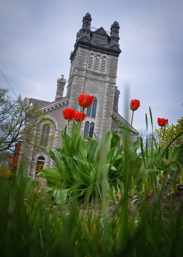 A view of a neat old world church in downtown Belleville. I laid the camera in the grass in front of the flowers belonging to St. Thomas (another church across the street) and angled it to catch an upward, hopeful perspective, with bright tulips, lightened with some flash, defying a gloomy day.