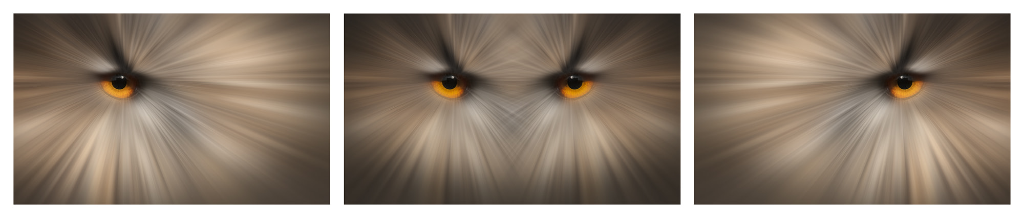 Photograph Eyes of a Killer by Andy Astbury on 500px