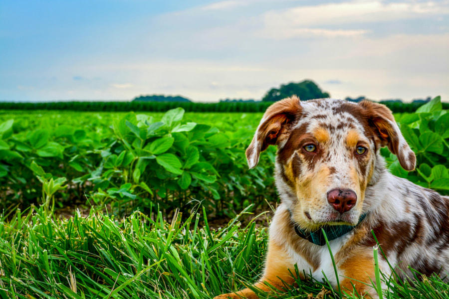 Lambeau Next to The Soybean Field by Jared Unverzagt on 500px.com