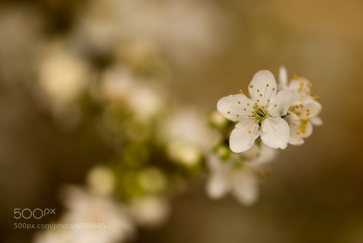 Photograph Spring {Brown} by Aileen Sorenson on 500px