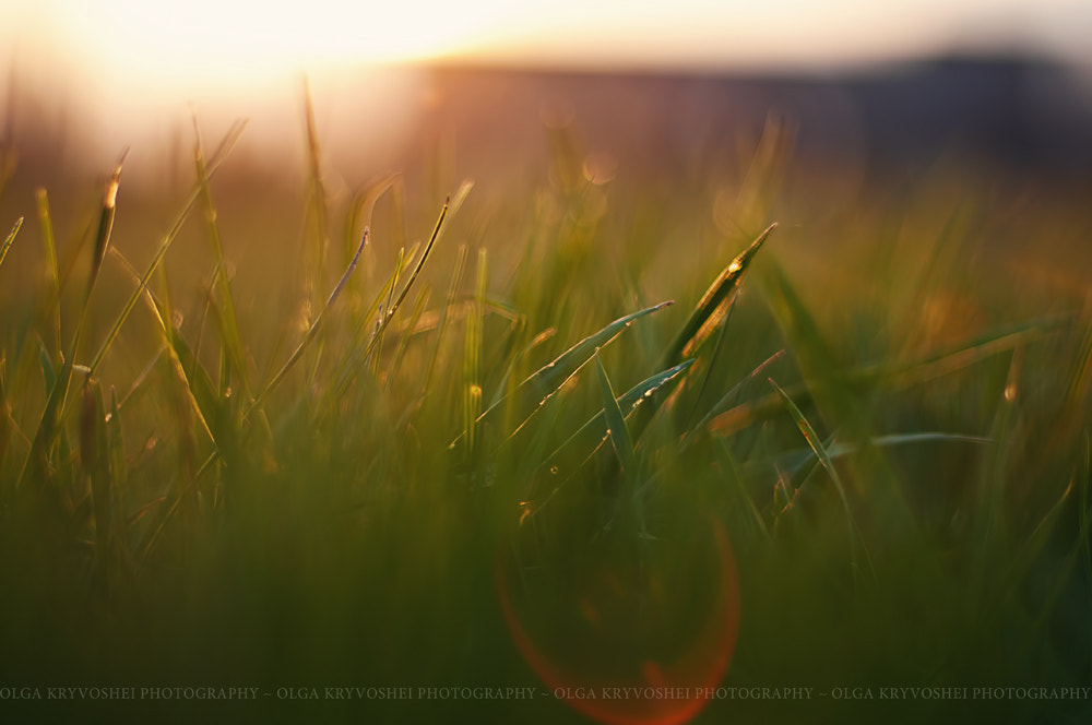 Photograph sunset in april by Olga  Kryvoshei on 500px