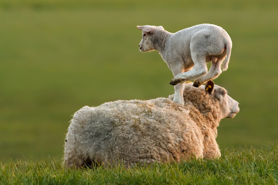 Photograph Leap Sheeping by Roeselien Raimond on 500px
