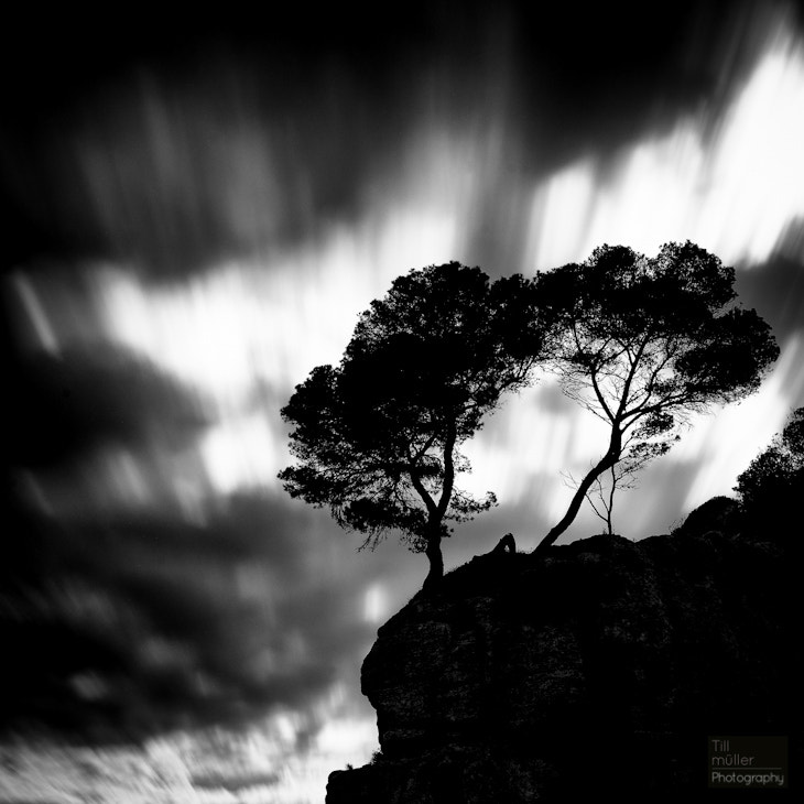 Photograph Lonely trees by Till Müller on 500px