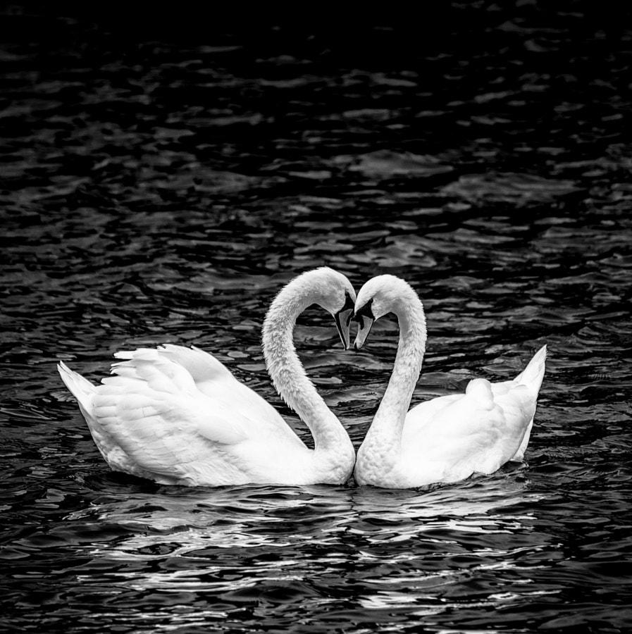 Love by Renzo Gherardi on 500px.com