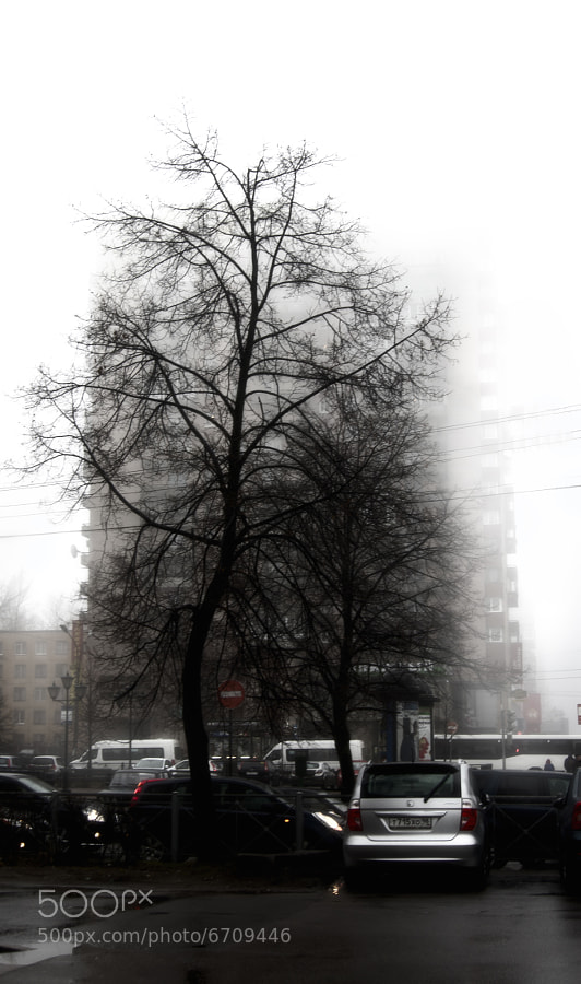 the fog in Saint-Petersburg by Pavel Nabatov (ra1apo) on 500px.com