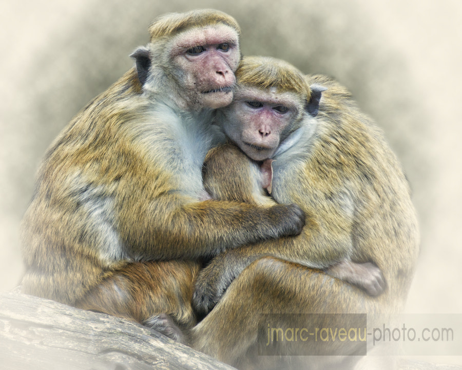 Photograph Bonding by Jean-Marc Raveau on 500px