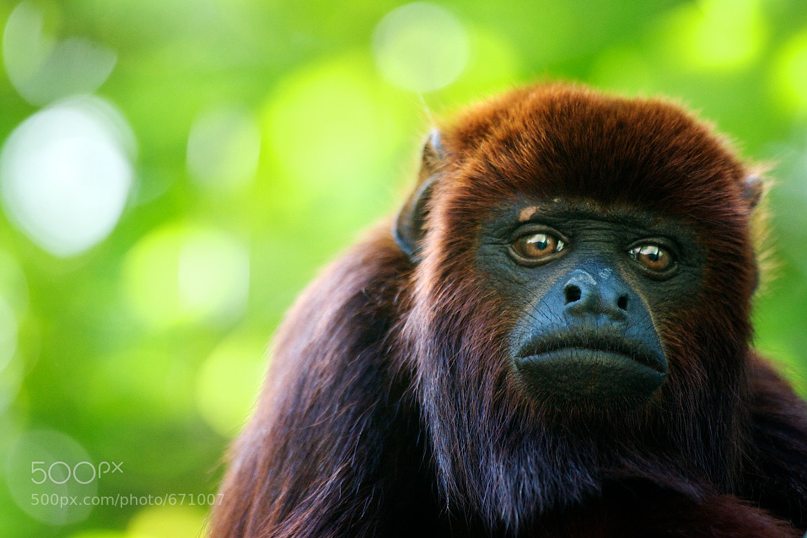 Photograph Monkey by Mauri  on 500px