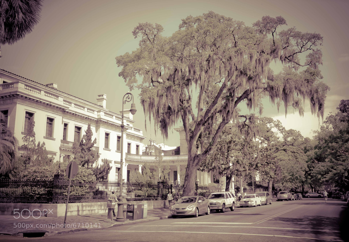 Photograph The famous Spanish moss by younes sediki on 500px
