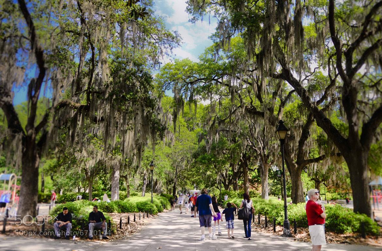 Photograph Savannah, GA by younes sediki on 500px
