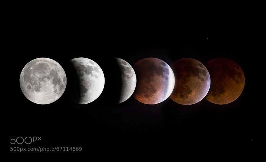 Photograph Blood Moon by Chris Toumanian on 500px