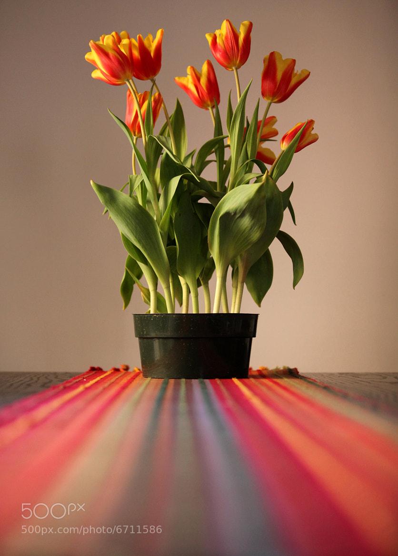 Photograph table dof by Jon Cianfrani on 500px