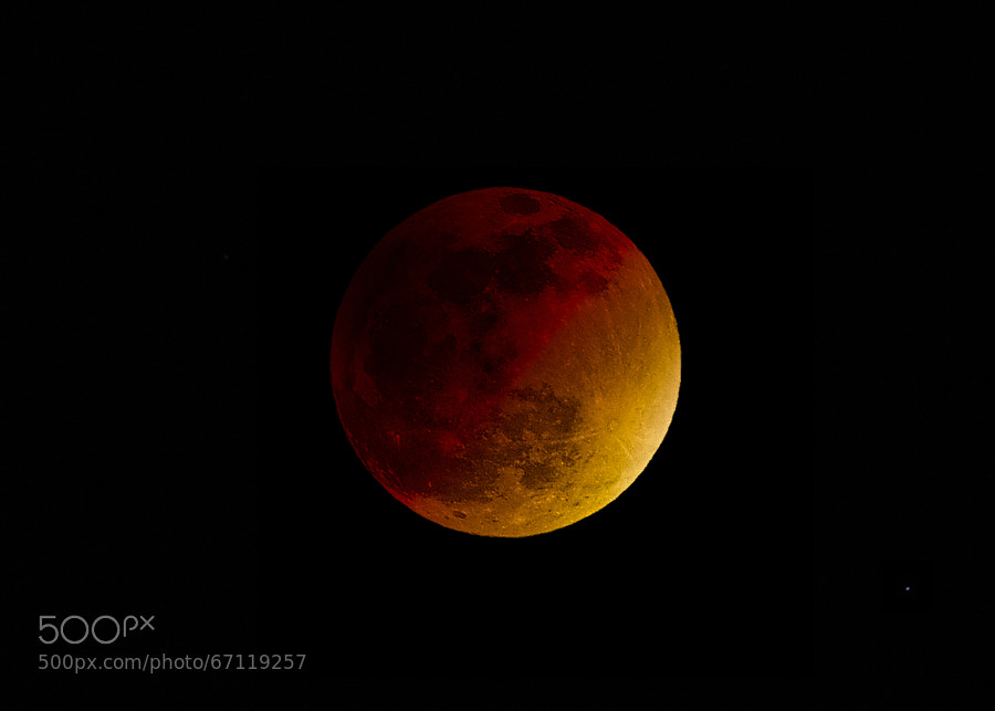 Photograph BLOOD MOON by Jack Gray on 500px