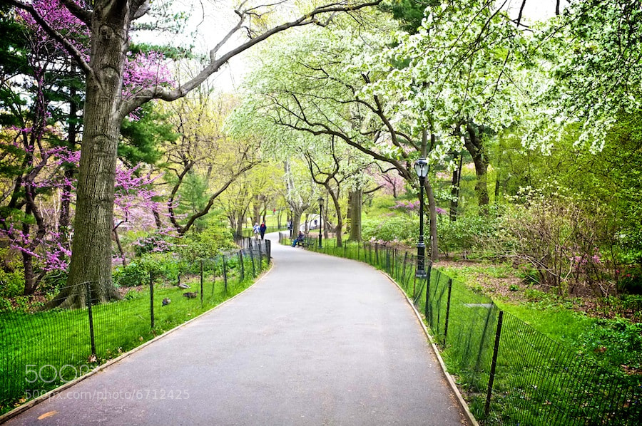 Photograph Central Park by Rhys Hastings on 500px