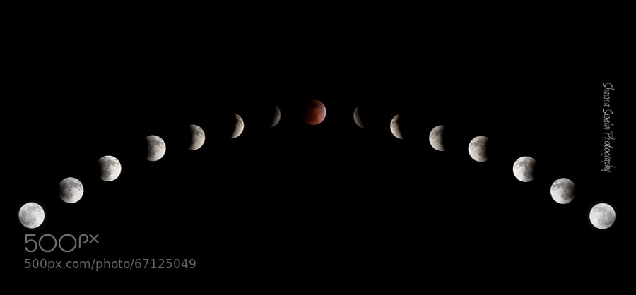 Photograph Lunar Eclipse Swaim Photography by Shawna Swaim on 500px