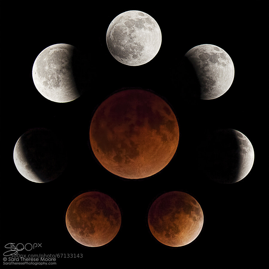 Photograph Blood Moon by Sara Therese Photography on 500px
