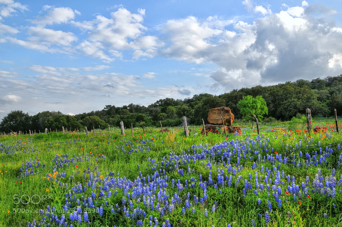 Photograph Texas Wildflowers in Burnet, Texas by Ronnie Wiggin on 500px