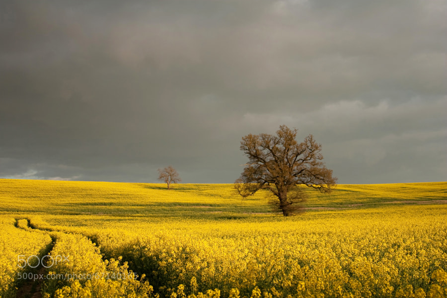 Northamptonshire,UK
