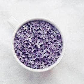 lilac by Toma EvsuVdo (EvsuVdo) on 500px.com