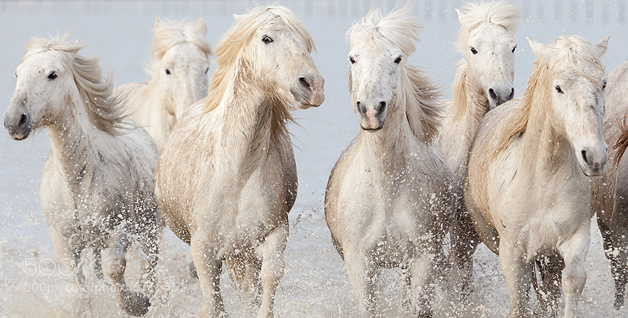 Photograph running wild horses by Marco Carmassi on 500px