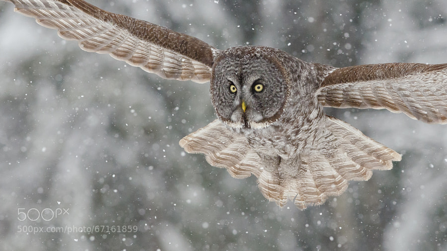 Photograph On target by Maxime Riendeau on 500px