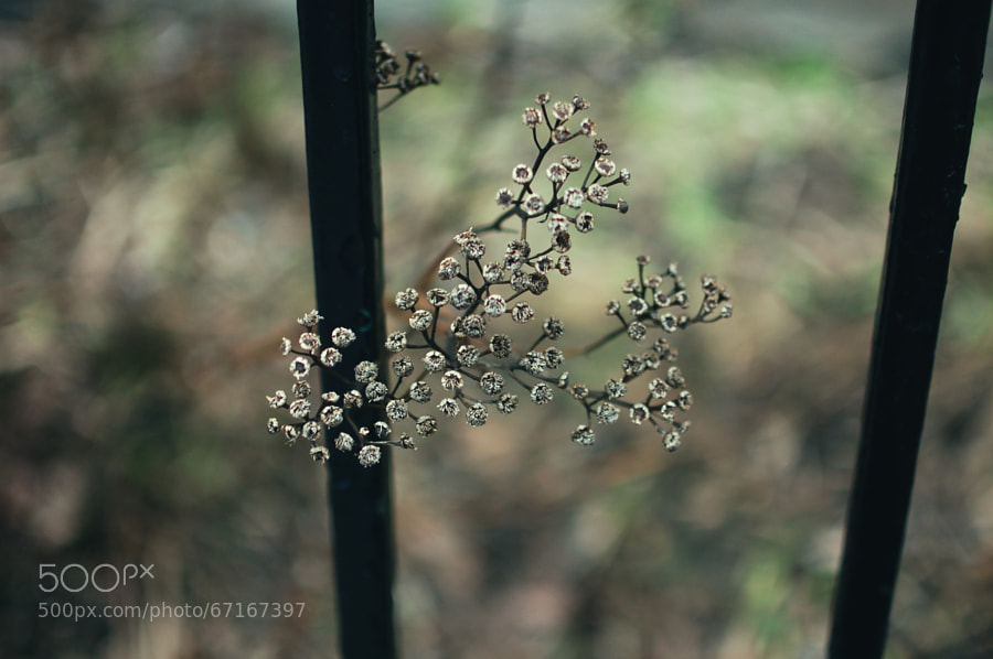 Photograph Weeds on 500px
